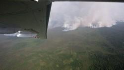 Площадь лесных пожаров выросла в РФ за сутки до 11,9 тысячи га-wpid-713563391