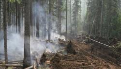 """WWF: подмосковные леса из-за сухостоя превратились в """"пороховые бочки""""-wpid-718245449"""