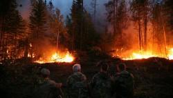 Ожидается, что площади лесных пожаров в Приморье будут расти-wpid-973001281