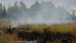 Торфяники в этом году будут гореть меньше обычного-wpid-397970039
