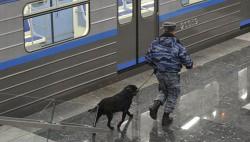 Более 1,2 тыс преступлений на транспорте помогли раскрыть собаки-wpid-504476526