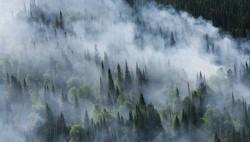 Рослесхоз предупреждает о начале пожароопасного сезона в России-wpid-908929783_0